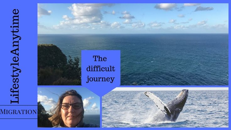 Migration - The difficult journey