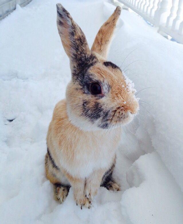 Bunny chainsaw !!