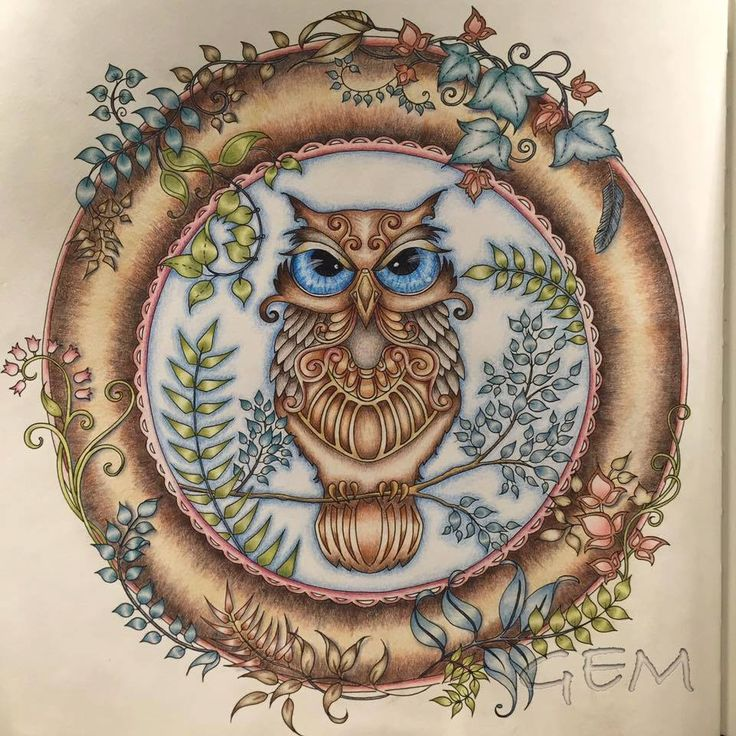 Forest Pictures Coloring Books Colouring Adult Pages Johanna Basford Rita Colored Pencils Owl Art