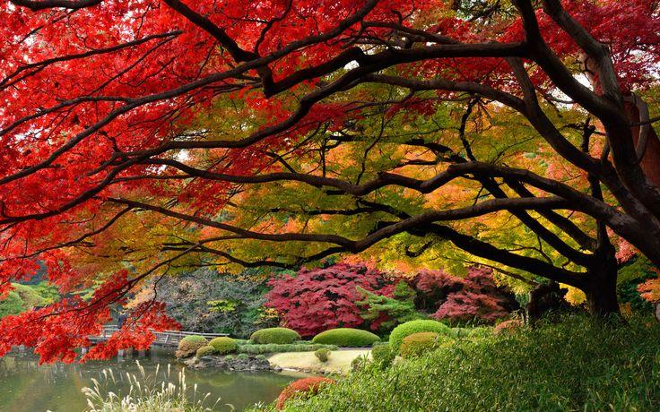 японский сад, япония, декабрь, токио, краски осени