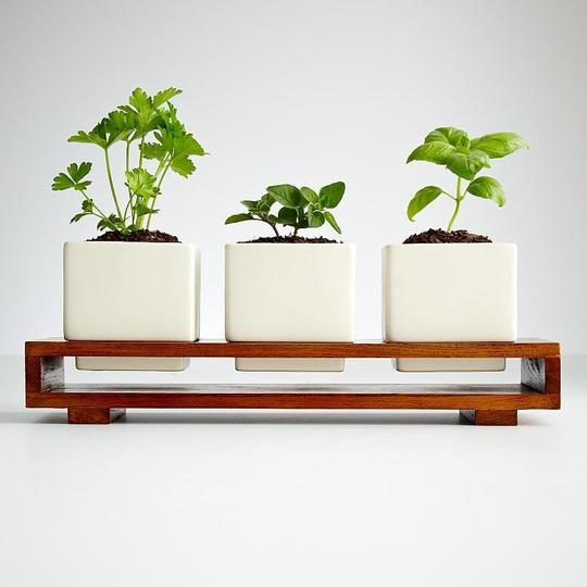 Indoor Edible Gardens Herb Planters Gardens Growing