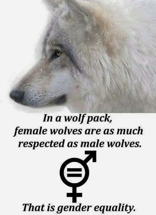Wolves are awesome