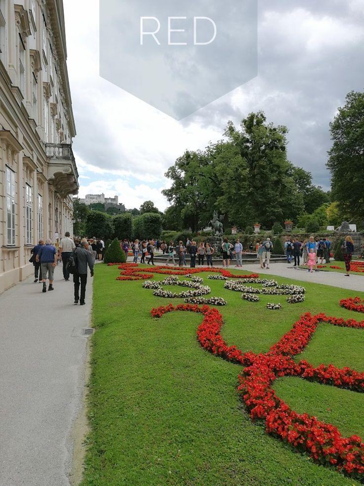 Color of The Week: red #salzburg #austria #flowers
