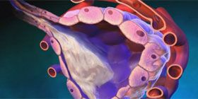 The growth factor receptor FGFR3 increases the rate of growth and aggressiveness of hepatocellular carcinomas (liver cell cancer), new research shows. Inhibition of this receptor could be a new and effective way of treating patients.