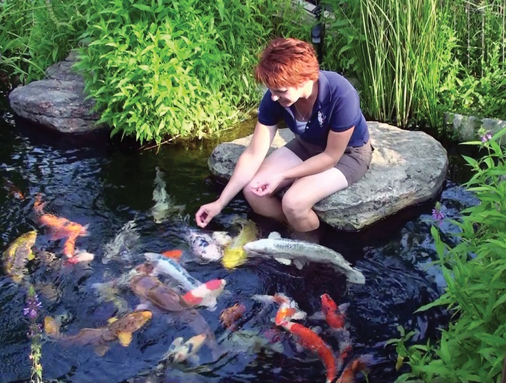 8 best apartments for rent in tillsonburg on on for Koi pond labradors