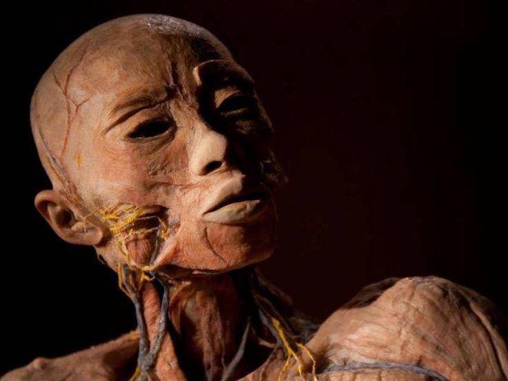 Exposição Fantástico Corpo Humano traz mais de 150 órgãos reais