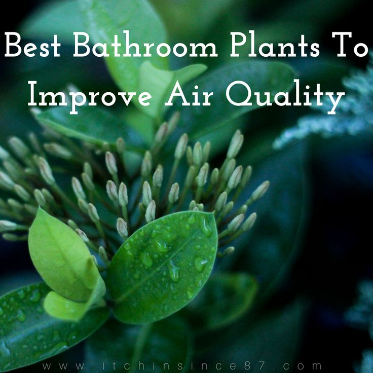 Air Purifying Plants For Bathroom: Best 25+ Bathroom Plants Ideas On Pinterest