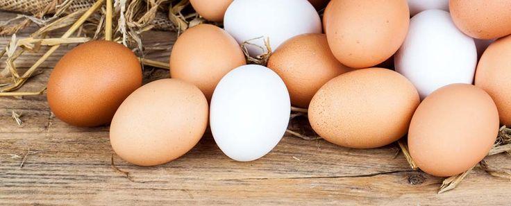 Zijn eieren gezond? Ontdek alle mythes en waarheden over kippeneieren