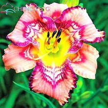 30 Pcs Hybride de Mélange Noir Fleurs D'hémérocalles Semences Rare Couleur hybride Hémérocalles Graines Nouveau Jour Lily Paquets De Graines Jardin Décoration *(China (Mainland))