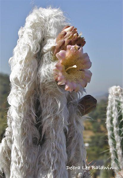 A bizarre cactus http://www.pinterest.com/madalenamribeir/cactus-flowers/