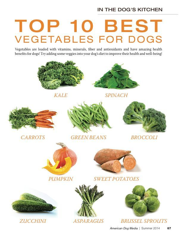 The Top 10 Best Vegetables for Dogs! As always, everything in moderation... Vegetables chunks  are the perfect healthy homemade dog treats.