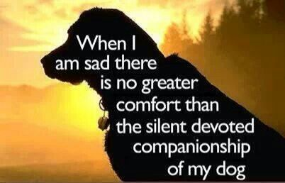 When I am sad there is no greater comfort than... ♥
