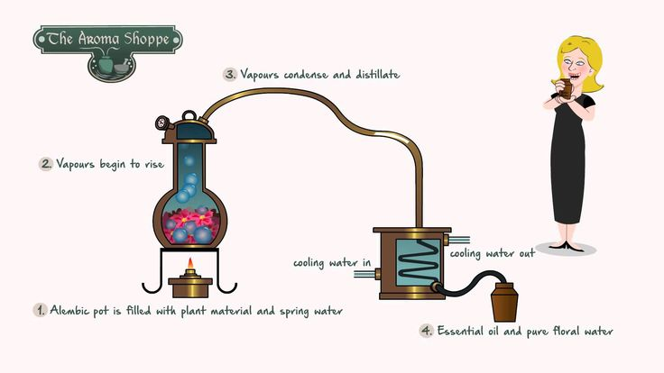 Steam Distillation of Plants at the Aroma Shoppe