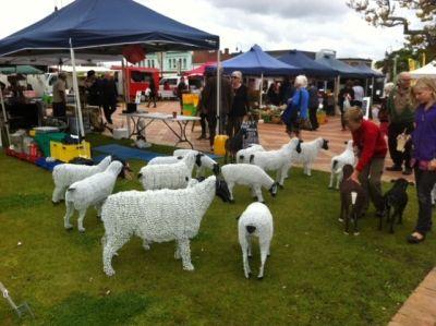 Sheep at Farmer's Market