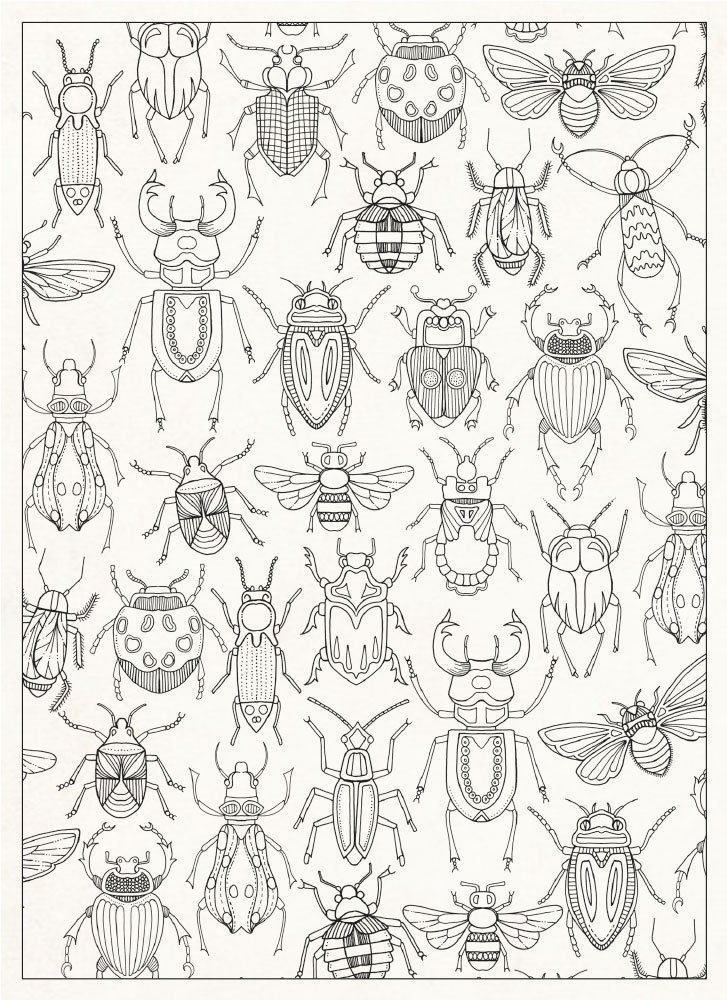 Bug Coloring Page (727 × 1000)