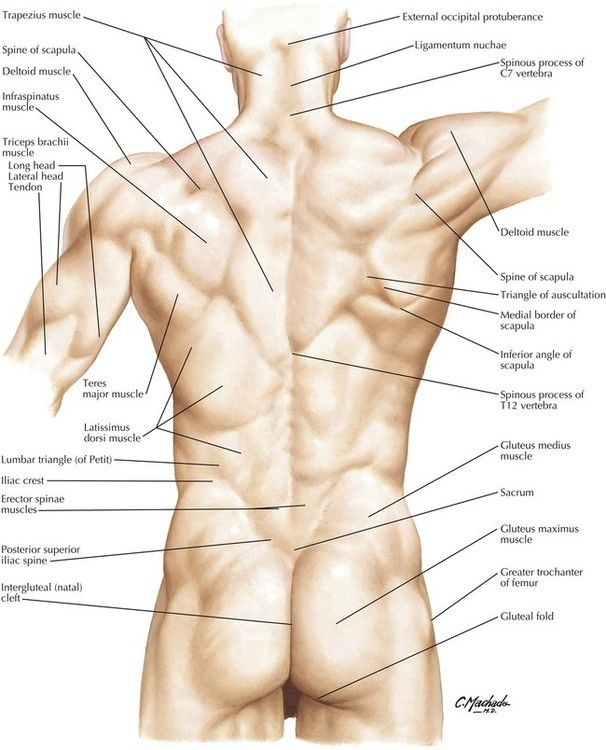 Image Result For Surface Anatomy Lumbar Spine Yoga Anatomy