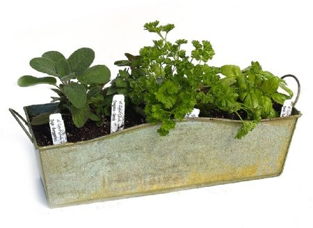 Windowsill Herb Planter Kit Yard Garden Pinterest Herbs Herb Planters And Planters