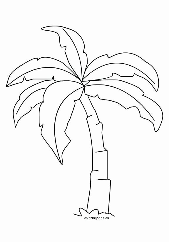 Palm Leaf Coloring Page Luxury Palm Tree Leaves Coloring Pages At Getcolorings Leaf Coloring Page Tree Coloring Page Leaf Coloring