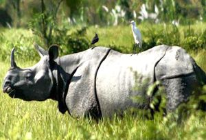 Visit Kaziranga National Park, a world heritage site, the park which hosts two-third of the world's Great One-horned rhinoceros. #Travel #NationalPark