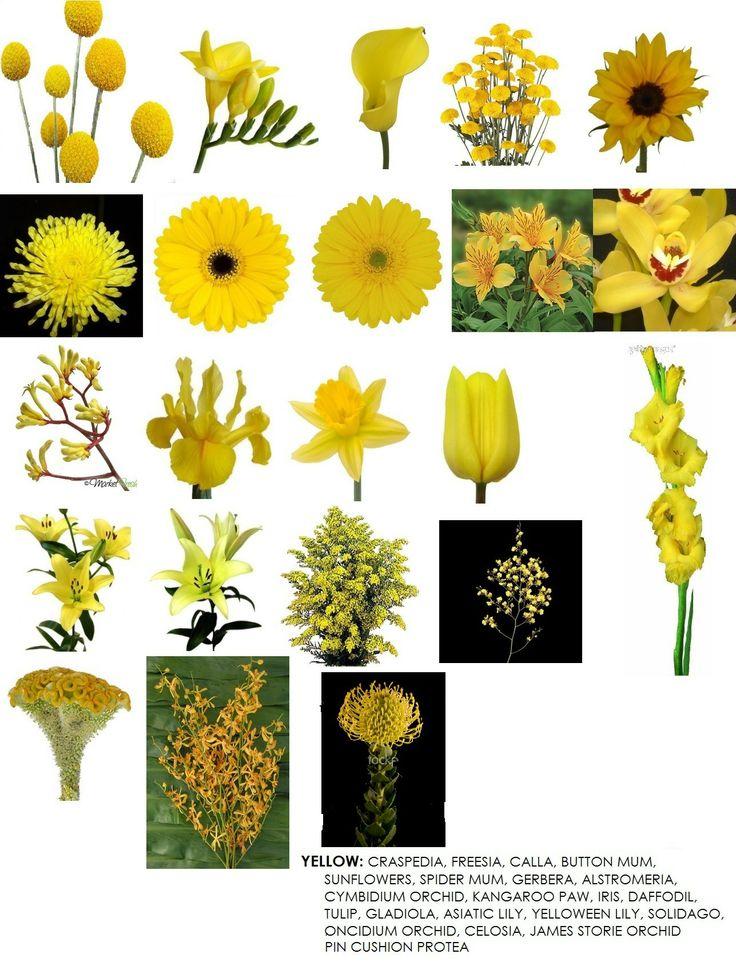 Tipos de flores amarillas