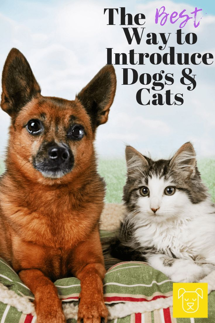 Introducing Cats And Dogs The Right Way Can Make All The Difference Click Though To Read About The Be Introducing Kitten To Dog Introducing Dog To Cat Dog Cat