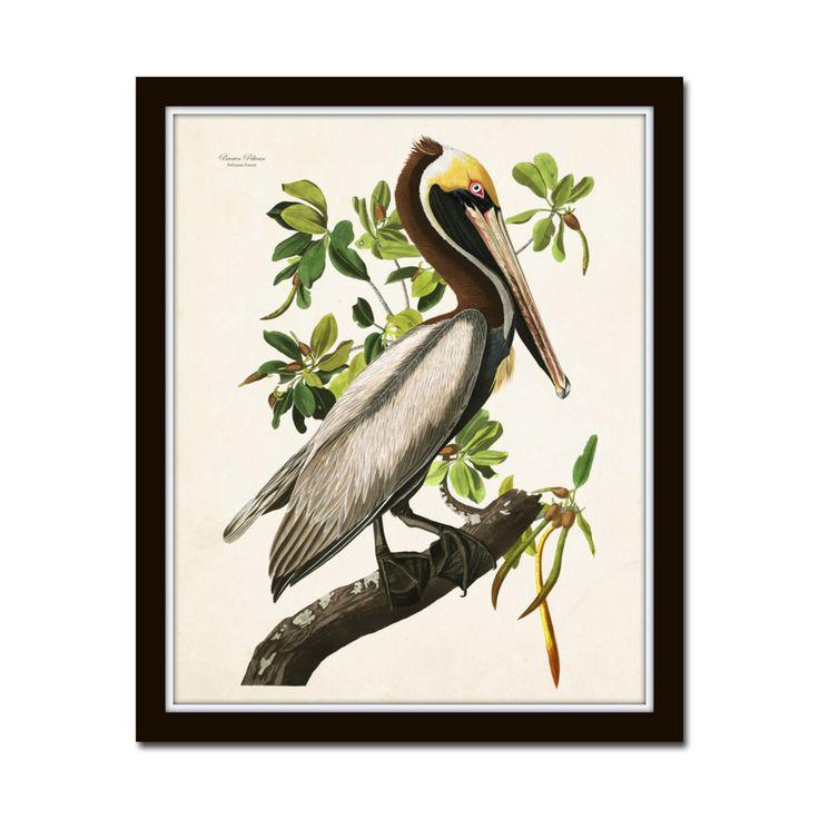Vintage Audubon Brown Pelican Bird Print, Giclee, Art Print, Poster, Home Decor, Coastal Art, Audubon Bird Prints, Illustration, Sea Bird by BelleMerGraphics on Etsy https://www.etsy.com/listing/246213821/vintage-audubon-brown-pelican-bird-print