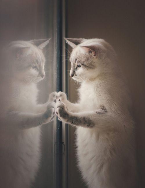 Miaouh ! Miaouh !… le miaulement des chats, c'est terminé avec Miaow Control http://infos-75.com