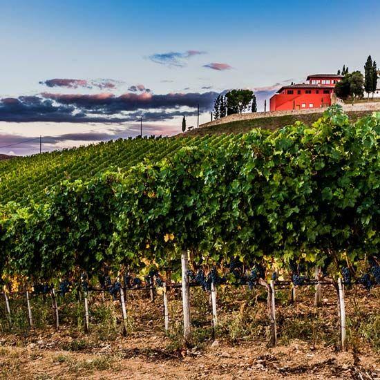 Maremma winery: Poggio Lungo, Grosseto Tuscany Italy