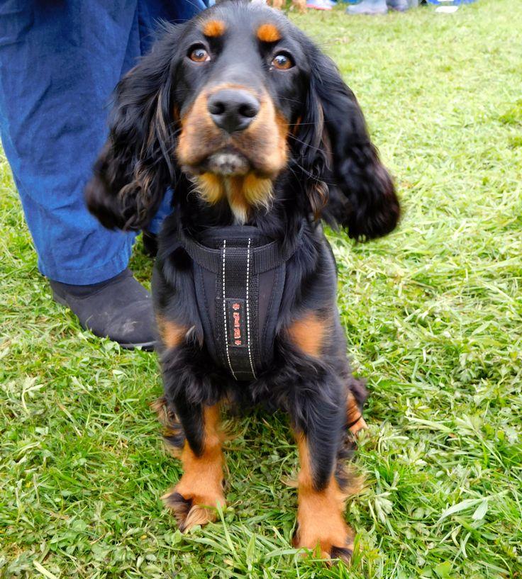 #BushcraftShow #Dog