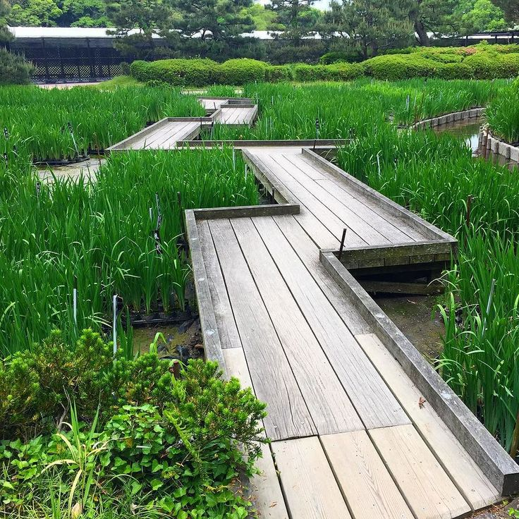 Традиционный японский мостик яцухаси с поребриком. Вот-вот расцветут ирисы. #Япония #сад #японскийсад #традиция #ландшафтный_дизайн #садоводство #дизайн #пейзаж #мост #мостик #поребрик #доски #садик #парк #ирисы #цветы