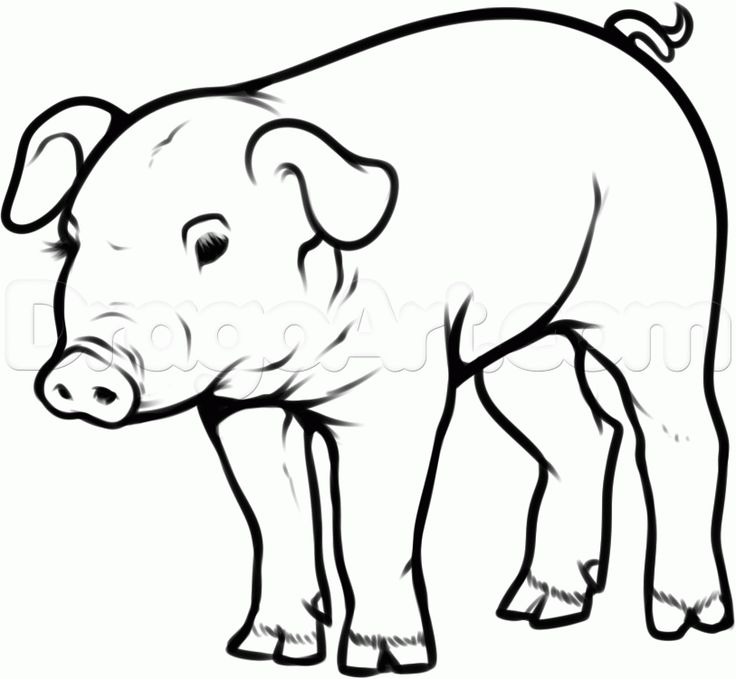 how to draw a pot belly pig step 10