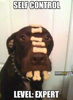 Images of the day -25 pics- Self Control Level Expert