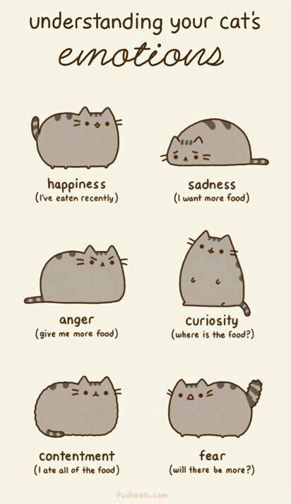 understanding your cat's emotions. =^.^=