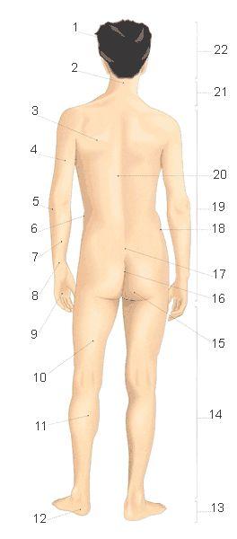 Il corpo dell'uomo (2) Esercizio di vocabolario: http://www.impariamoitaliano.com/vcud01d.htm