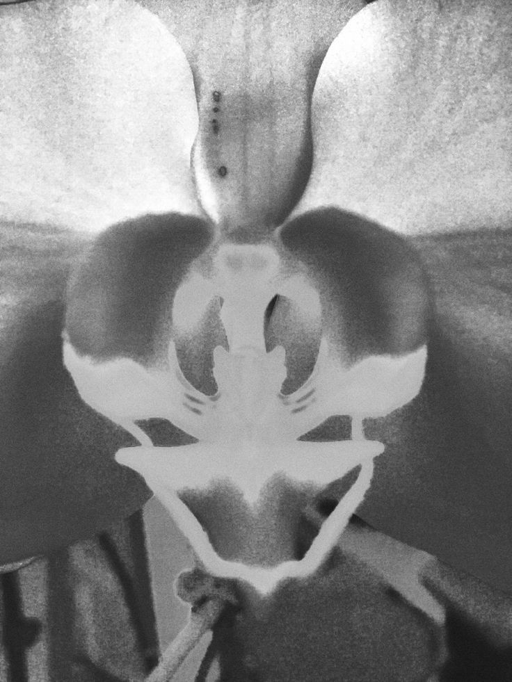 Orchid in black and white. Taken with my handy dandy iphone.