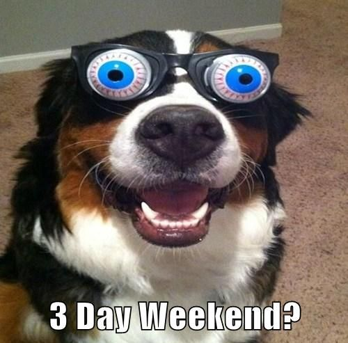 9010d71857887ae500ec86ea1a54734a crazy eyes big eyes 71 best funny friday dogs images on pinterest animals, funny,Funny Memorial Day Memes