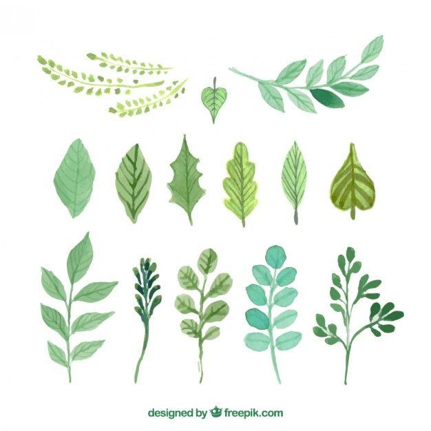 Pintados a mano las hojas verdes Vector Premium