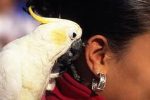 "5 Words and Phrases to Teach Your Talking Parrot: Teach your bird to say ""Hello."""