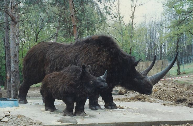 001 woolly rhinoceros Google Search Animals Pinterest