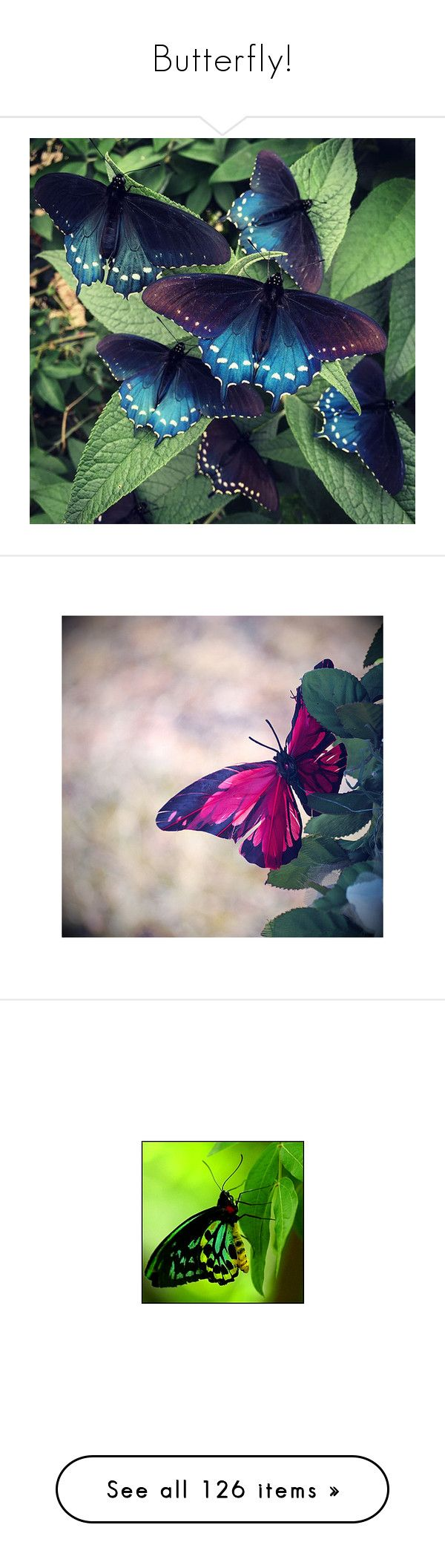 """Butterfly!"" by sarahguo ❤ liked on Polyvore featuring backgrounds, butterflies, dragonflies, green, animals, fondos, home, home decor, wall art and blossom wall art"