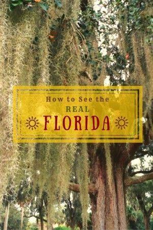 716 Best Florida Family Fun Images On Pinterest Viajes