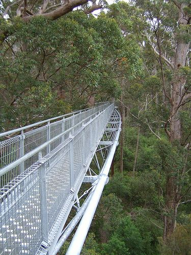 A one-of-a-kind walk through the canopies. Experience this and more on the longest walking trail in Australia and the world, the Bibbulmun Track: http://www.outdooroz.com.au/trekking-the-bibbulmun-track/