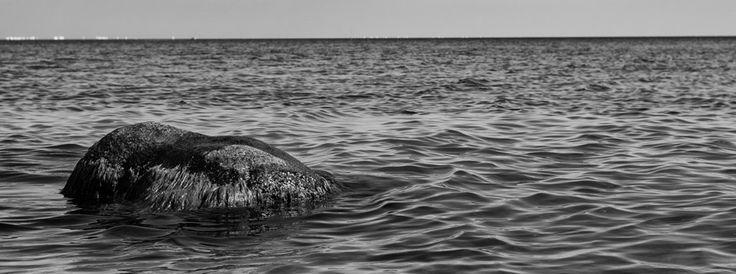 Co jeszcze oprócz wody po horyzont, jest w morzu najlepsze?