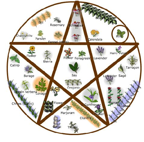 17 Best Images About Witchcraft Herbs And Healing On
