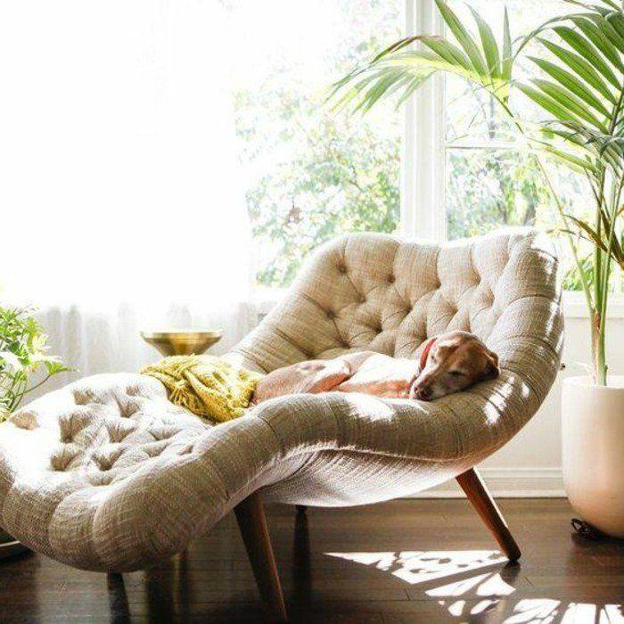 stile di coccole, grande finestra, cane che dorme, piante tropicali