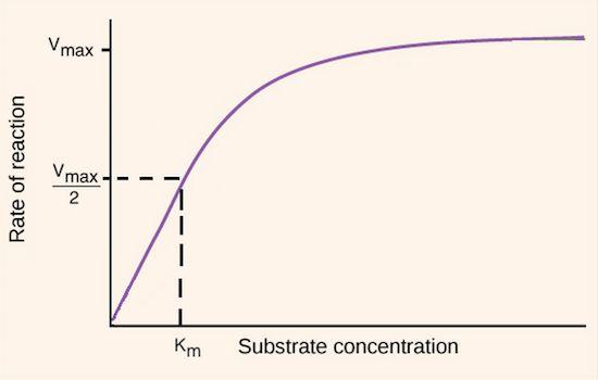 Basics of enzyme kinetics graphs | Enzyme regulation | Khan Academy
