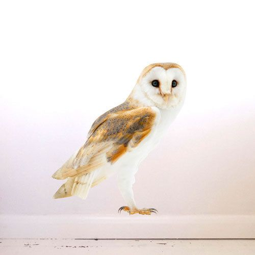 Barn Owl Wall Decal by #JuneFoxStudio on Etsy