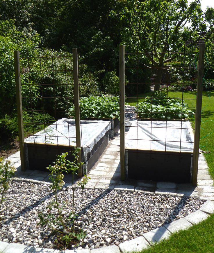 Bildresultat för thuja plantering