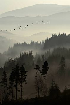 Another neat mural idea for the outside of the house, misty forested hills