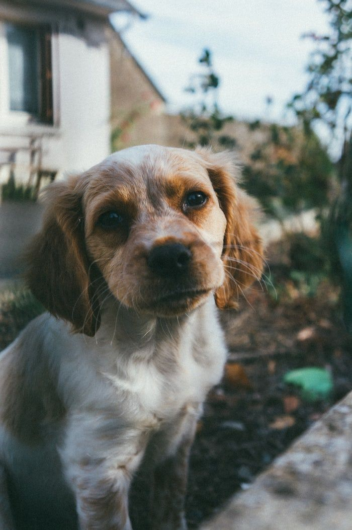 Cheerful Pictures Download Free Images On Unsplash Cute Cats And Dogs Funny Dog Pictures Funny Dog Images